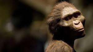 Australopithecus: ¿Quién es Lucy, la australopiteco? | Ciencia | EL PAÍS